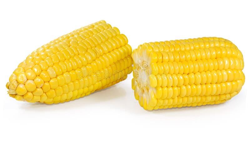 Fresh corn studio shot on white royalty free stock image