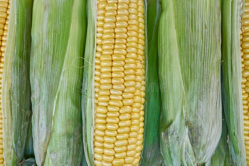 Fresh corn top view closeup, natural background. Fresh corn closeup, natural background, strong bokeh stock photo
