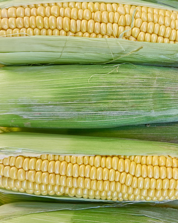 Fresh corn top view closeup, natural background. Fresh corn closeup, natural background, strong bokeh royalty free stock images