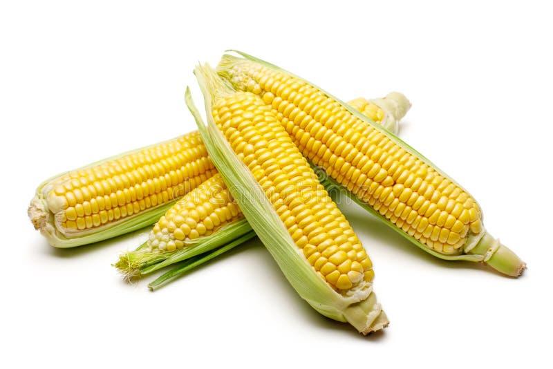 Fresh corn on white background royalty free stock photo