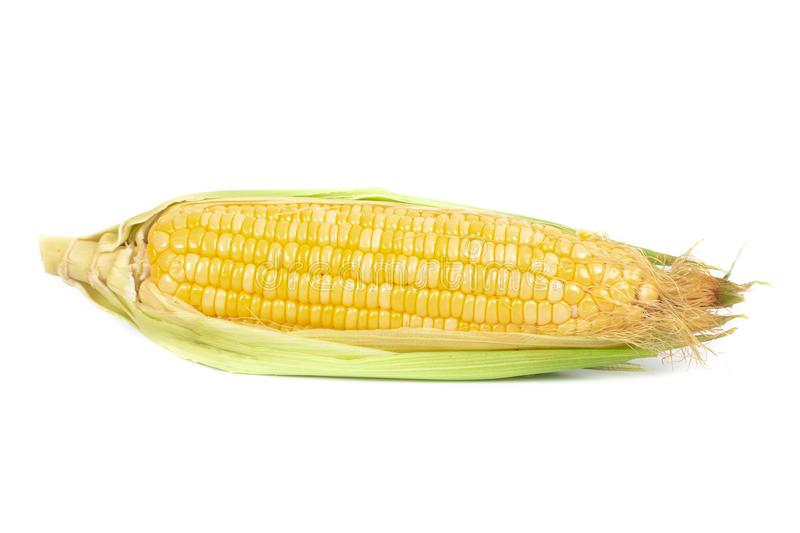 Fresh Corncobs or corn ears isolated on white. Background royalty free stock image