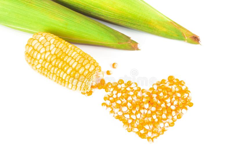 Fresh Corncobs or corn ears isolated on white. Background stock photo