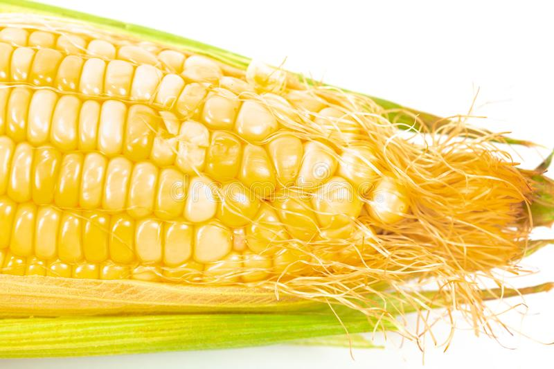 Fresh Corncobs or corn ears isolated on white. Background royalty free stock photography