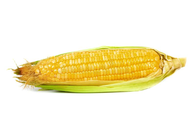 Fresh Corncobs or corn ears isolated on white. Background stock photography