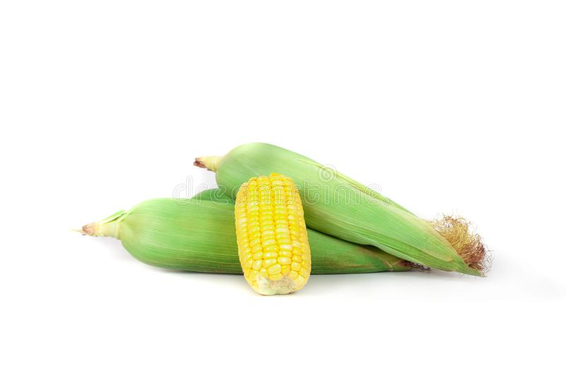 Fresh Corncobs or corn ears isolated on white. Background royalty free stock photos