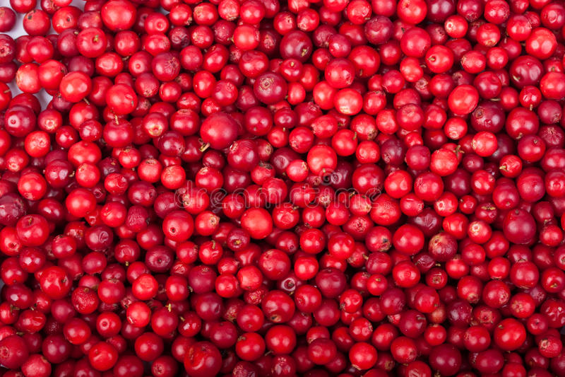 Fresh cowberry. Abstract background from fresh cowberry. Close up stock photos