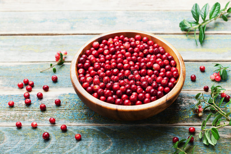 Fresh cowberry lingonberry, partridgeberry, foxberry in wooden bowl on rustic vintage table. Fresh cowberry lingonberry, partridgeberry, foxberry in wooden bowl stock image
