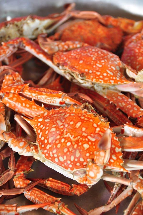 Fresh Crab background stock image