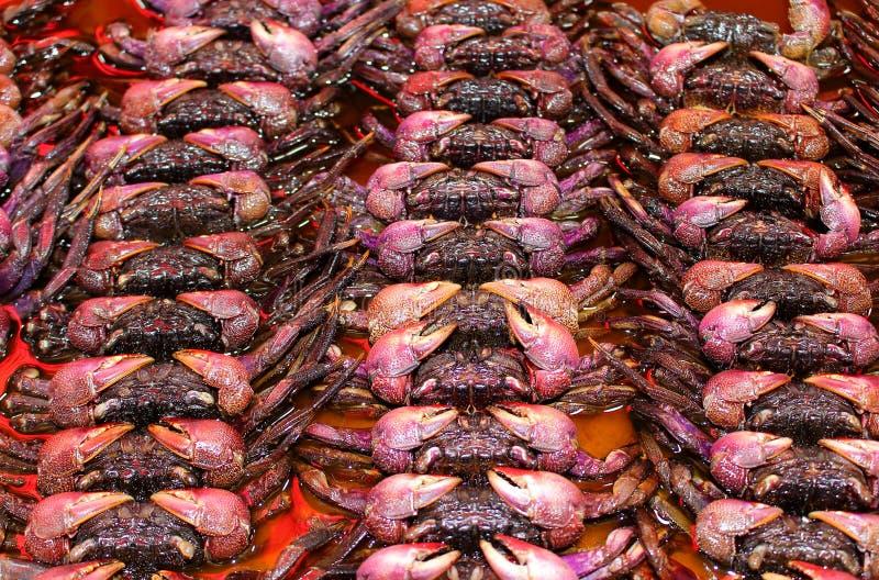 Fresh crab at the fish market royalty free stock image