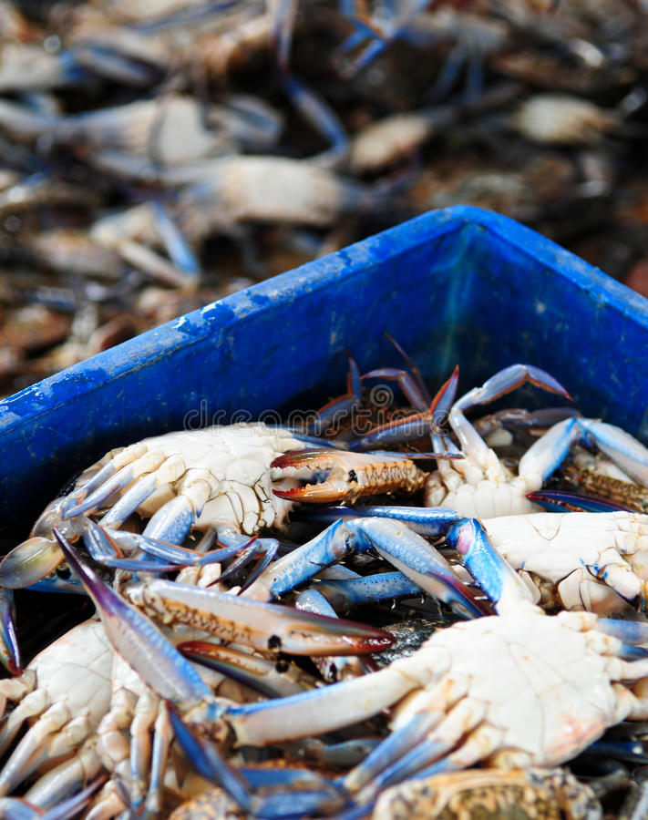 Fresh Crabs. A crate of fresh crabs straight from the Arabian Gulf at the fish market stock photo