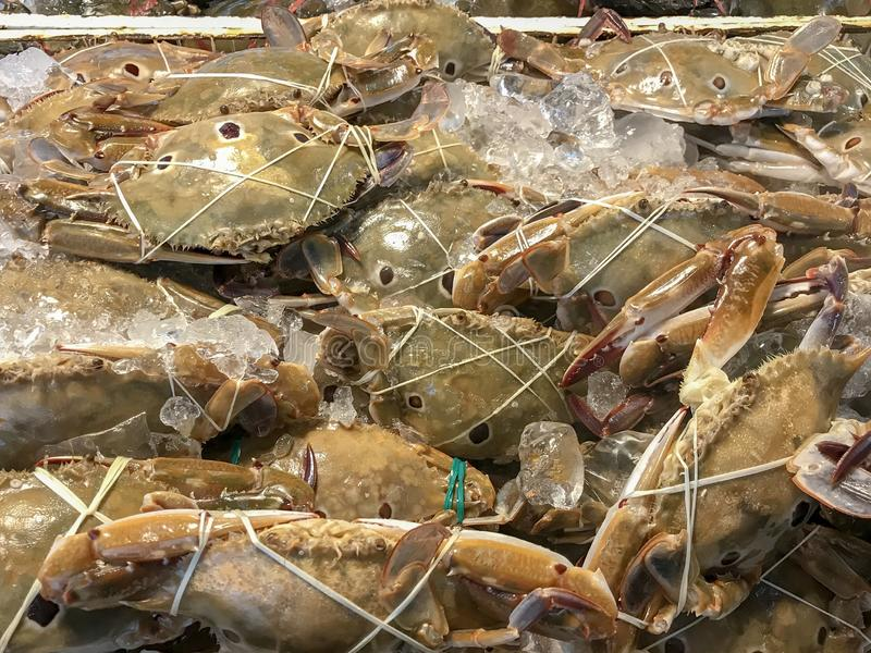 Fresh crabs. On ice ready to grill stock photo