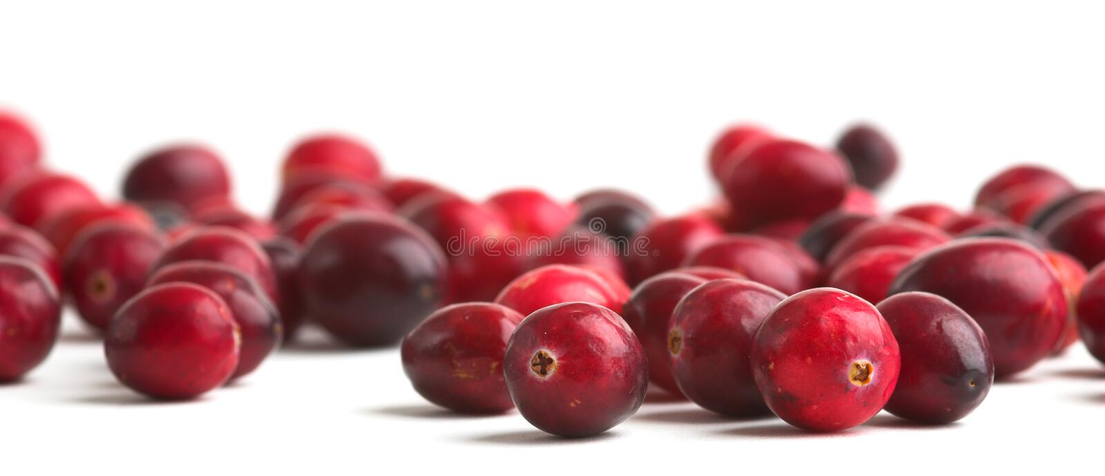 Fresh Cranberries. Cranberries against a white background royalty free stock photos