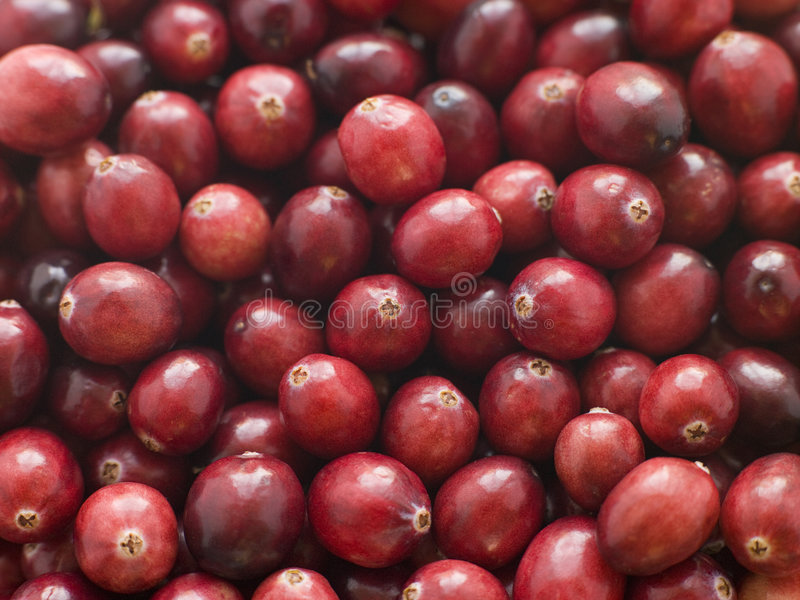 Fresh Cranberries. Close Up Of Fresh Cranberries royalty free stock photography