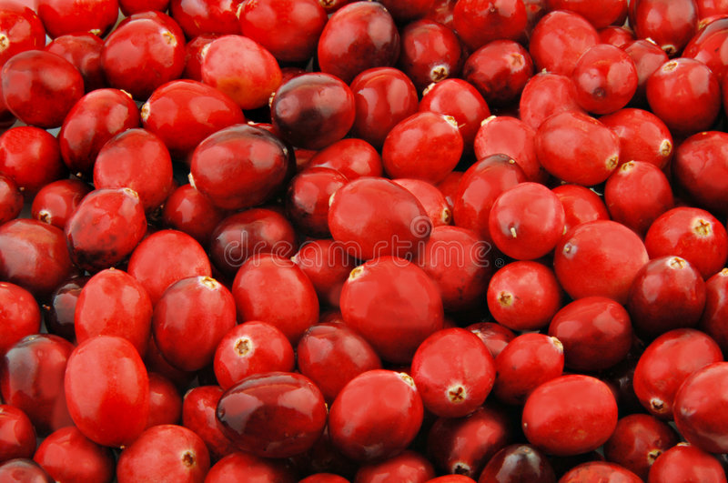 Fresh Cranberries. For use as a food background stock photography