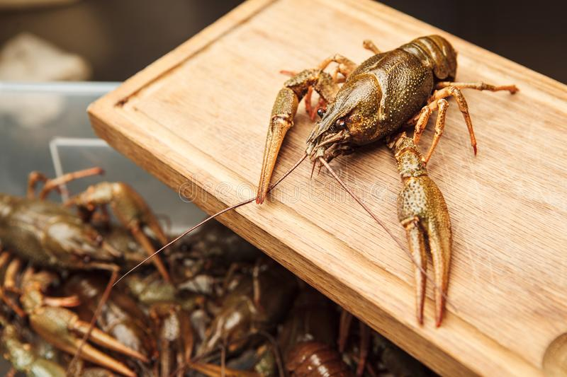 Fresh crawfish on wooden board,green lobster ready to be boiled. Healthy crawdad closeup view in green shell with background with lots of crayfish royalty free stock photo