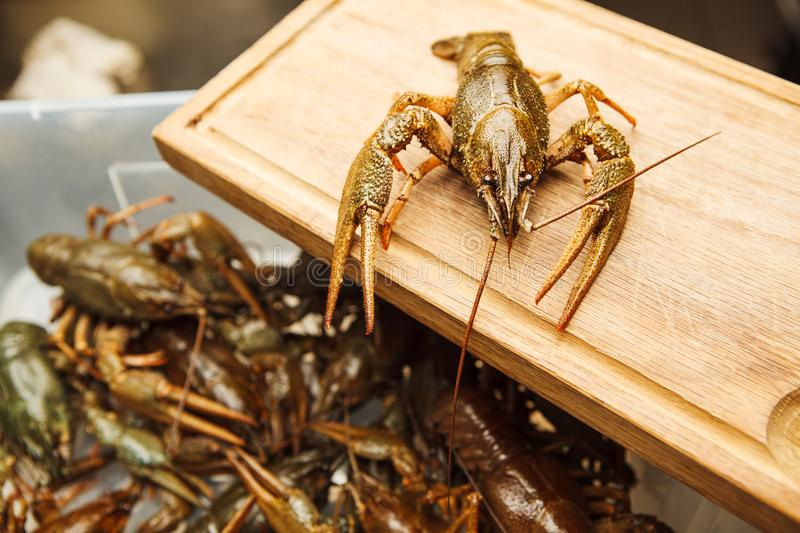 Fresh crawfish on wooden board,green lobster ready to be boiled. Healthy crawdad closeup view in green shell with background with lots of crayfish stock photo