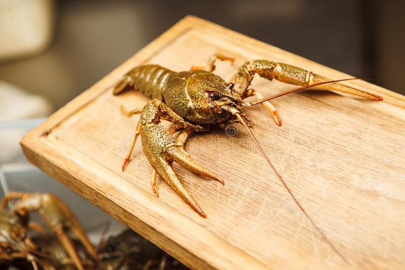 Fresh crawfish on wooden board,green lobster ready to be boiled. Healthy crawdad closeup view in green shell with background with lots of crayfish stock images