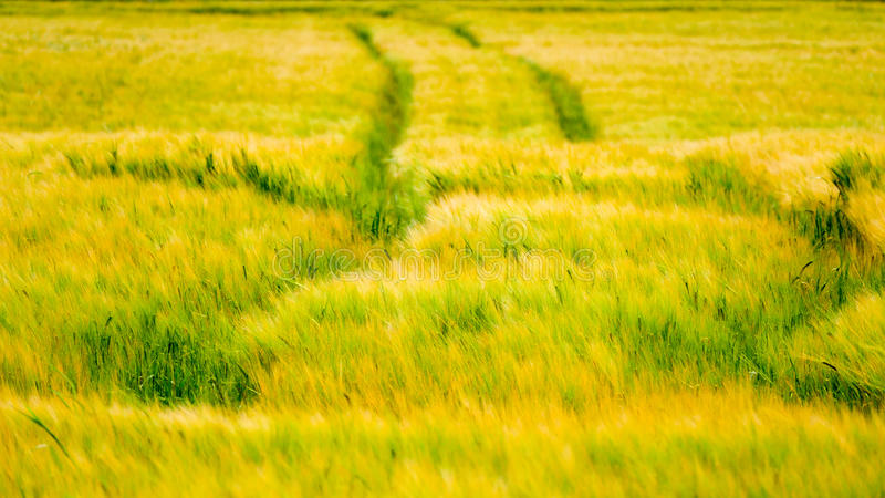 Fresh Crop with tracks on it royalty free stock photography