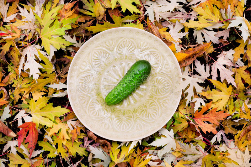 Fresh cucumber on a plate of the autumn background. Fresh cucumber on a plate of the autumn picnic, in fall foliage stock images