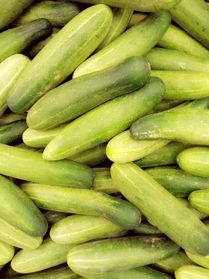 Download Fresh cucumbers stock photo. Image of crop, organic, healthy - 26522684