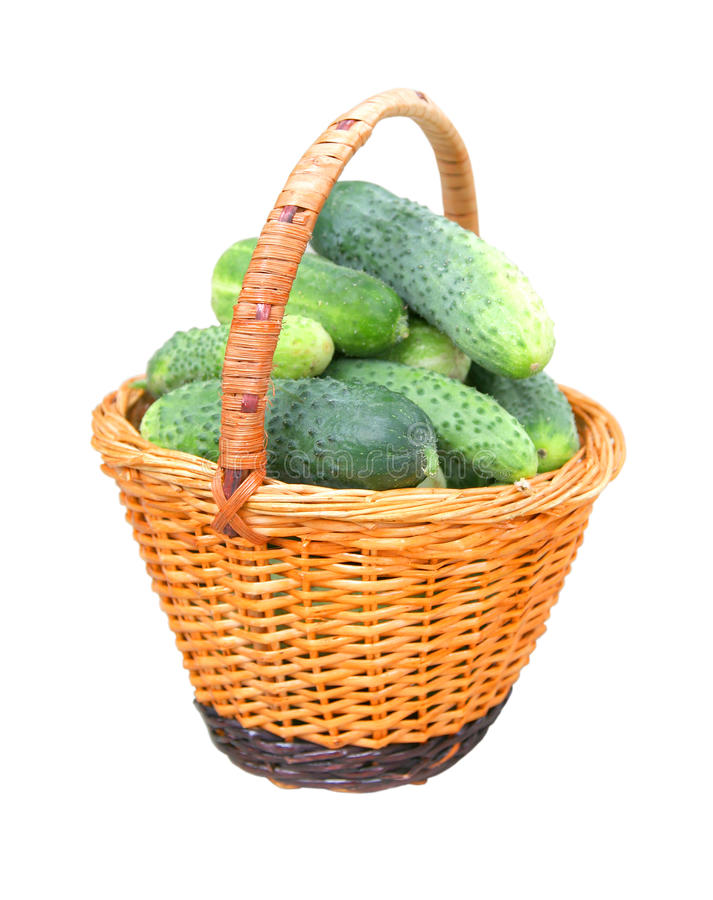Fresh cucumbers in a basket royalty free stock image