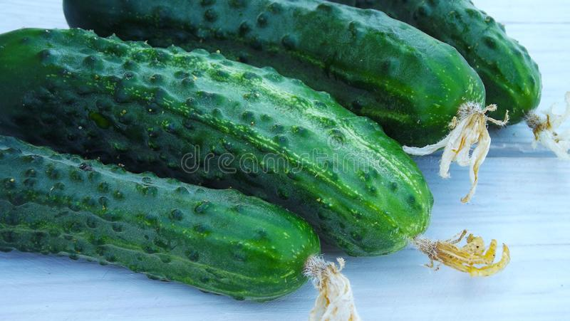 Fresh cucumbers from the garden. Fresh cucumbers from the garden on a wooden background stock image