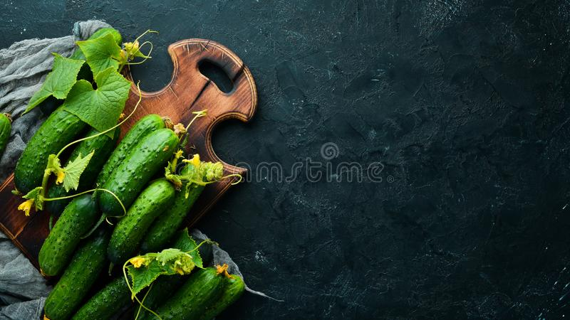 Fresh cucumbers with green leaves on a black background. Top view. Free space for your text royalty free stock image