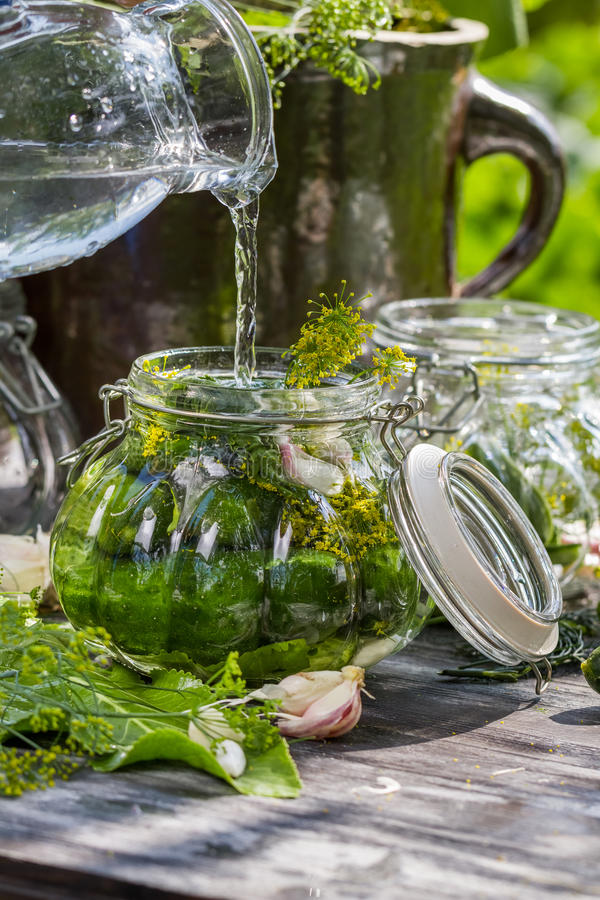 Fresh cucumbers in a jar royalty free stock image