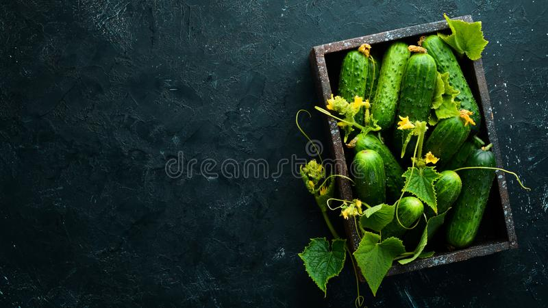 Fresh cucumbers with leaves in a wooden box. Top view. Free space for your text royalty free stock image