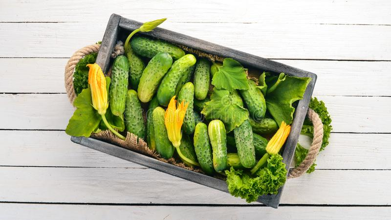 Fresh cucumbers in a wooden box. On a wooden background. Top view. Copy space royalty free stock photos