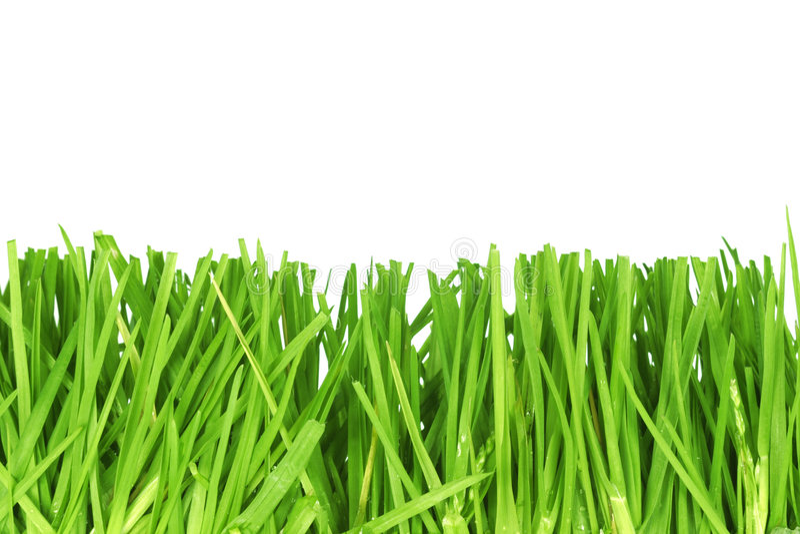 Fresh cut grass stock photography