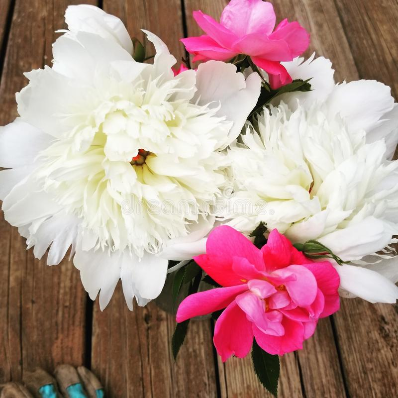 Fresh cut roses and peonies. Flowers, garden royalty free stock photography