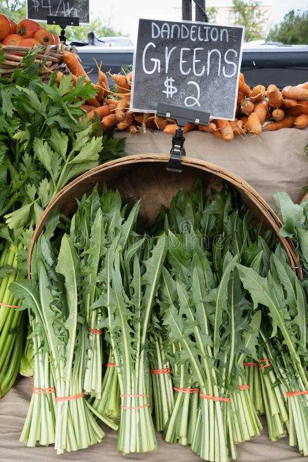 Fresh dandelion greens bundles in a basket stock images