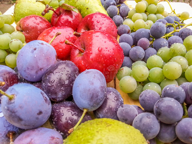 Fresh delicious bio fruits from romania. Delicious picture with fresh bio seasonal fruits from romania in autumn season ,plum,grape,red apples, diverity of stock images