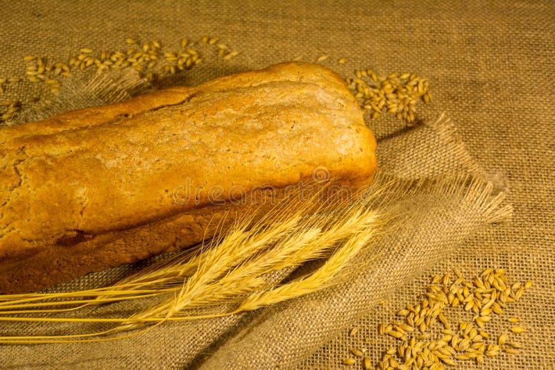 Fresh bread, wheat ears and grains stock photo