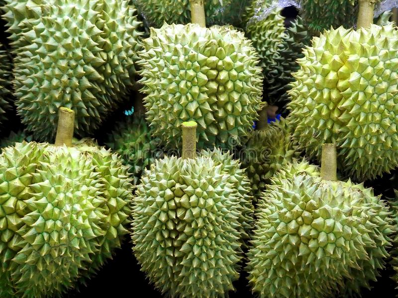 Fresh and Delicious Durians at the Fruit Market. Closeup Photo of Fresh and Delicious Durians at the Fruit Market stock image