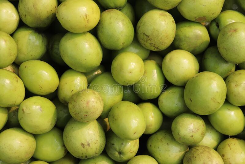 Indian Jujube Fruit