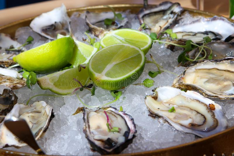 Fresh delicious oysters on ice with lime royalty free stock images