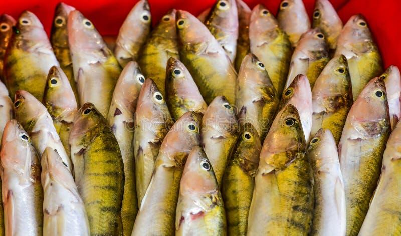 Fresh and delicious sea fish.  royalty free stock photos