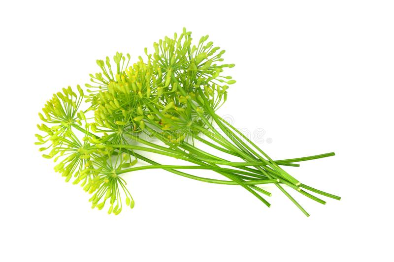 Fresh dill flower isolated on white background royalty free stock images
