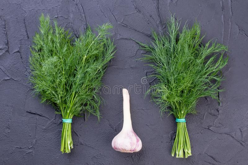 Fresh dill and garlic on slate. stock photography