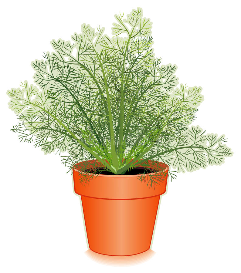 Download Fresh Dill Herb In A Flower Pot Royalty Free Stock Image - Image: 16611256