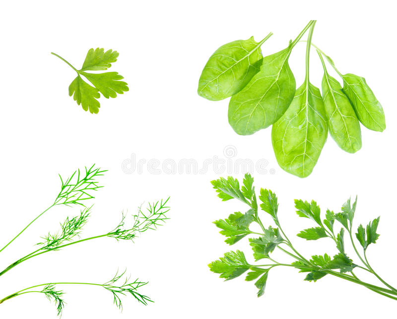 Fresh dill herb,parsley,spinach isolated .close up royalty free stock image