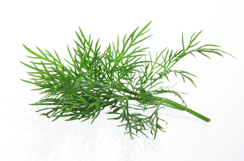 Fresh Dill Twig Royalty Free Stock Photography