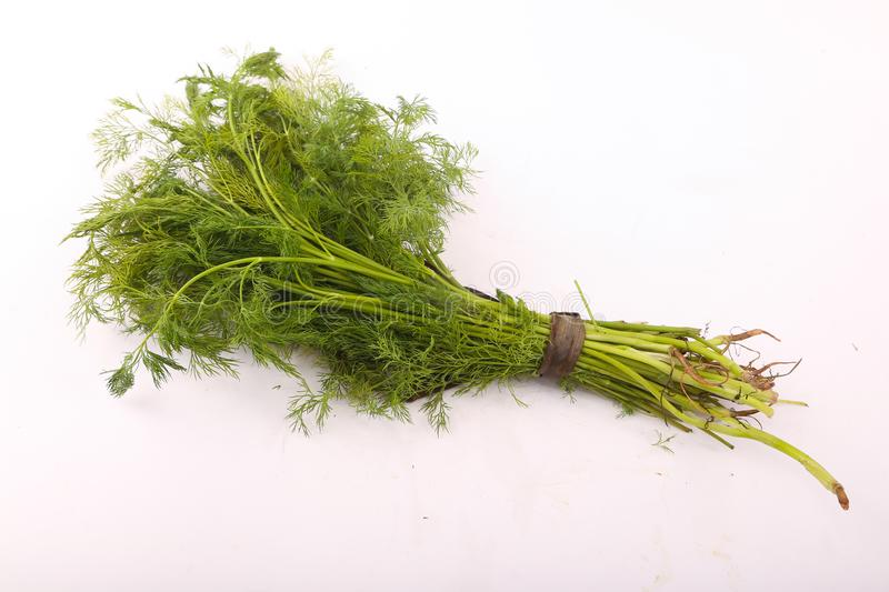Dill vegetable. Fresh dill vegetable on white royalty free stock photography