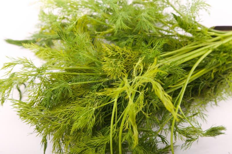 Dill vegetable. Fresh dill vegetable on white stock photo