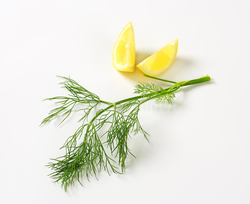 Fresh dill weed stock photo