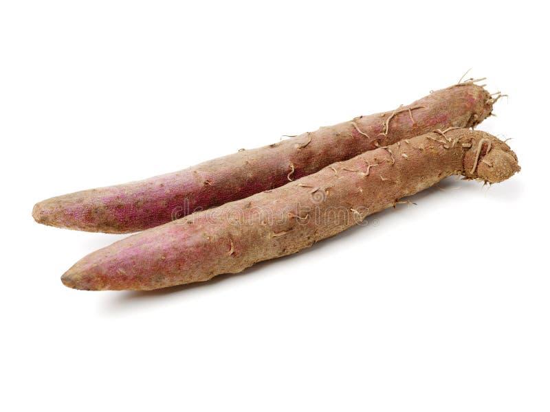 Fresh Dioscorea alata root. Isolated on white background stock image