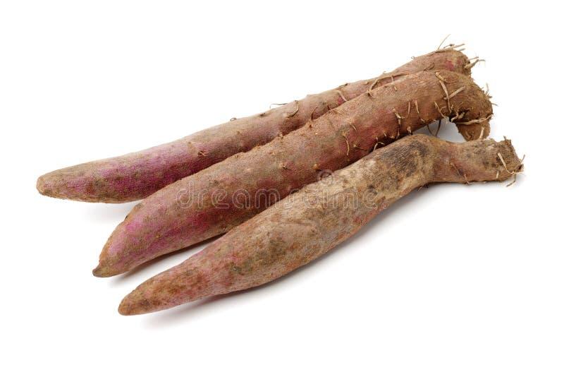 Fresh Dioscorea alata root. Isolated on white background stock photo