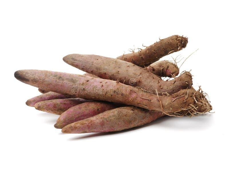 Fresh Dioscorea alata root. Isolated on white background royalty free stock photos